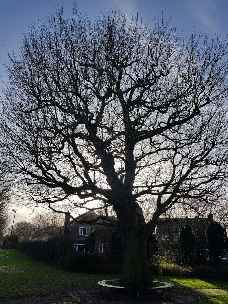 tree-surgeons-Northwich