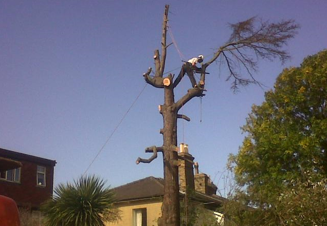 tree-surgeon-Winsford