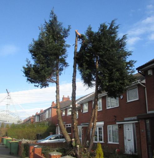 tree-removal-Northwich
