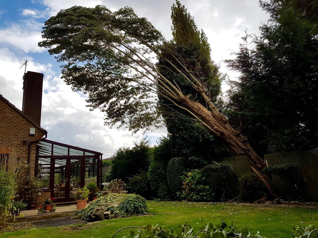 tree-removals-Northwich