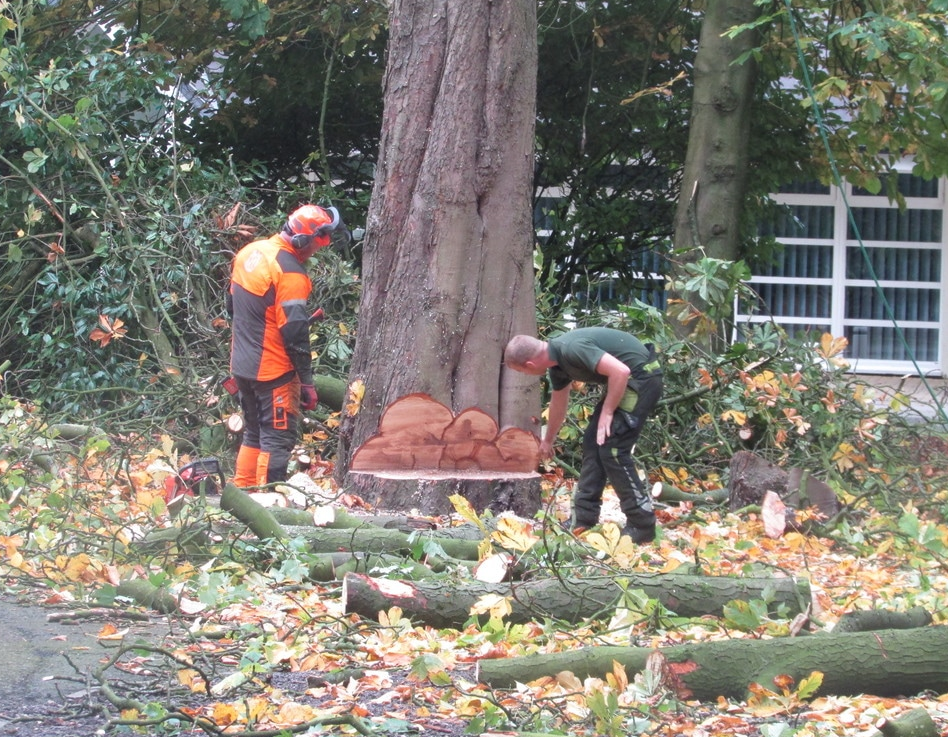 tree-surgeons-Macclesfield