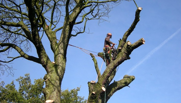 Northwich-tree-surgeon