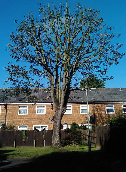 tree-surgeon-Middlewich
