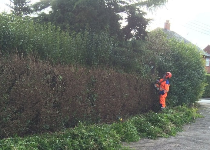 hedge trimming Northwich